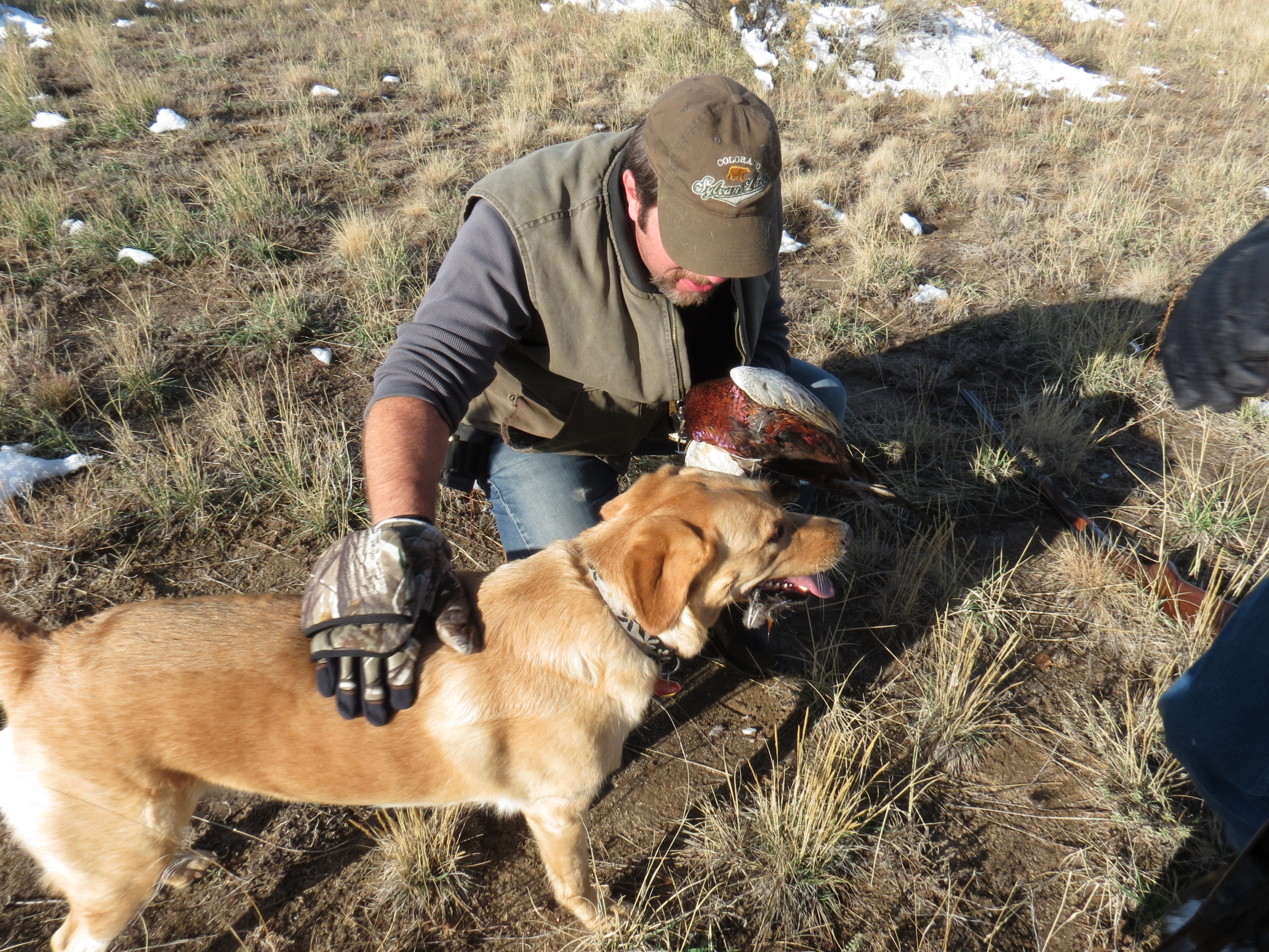 Guest Post: Off-Leash Reliability from a Positive Gun Dog Trainer's